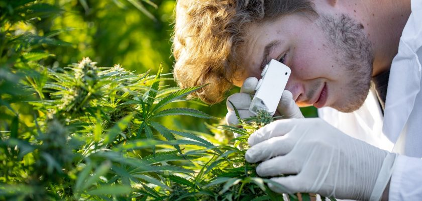 Therapeutic Uses Of Marijuana – Are They Worth Considering?