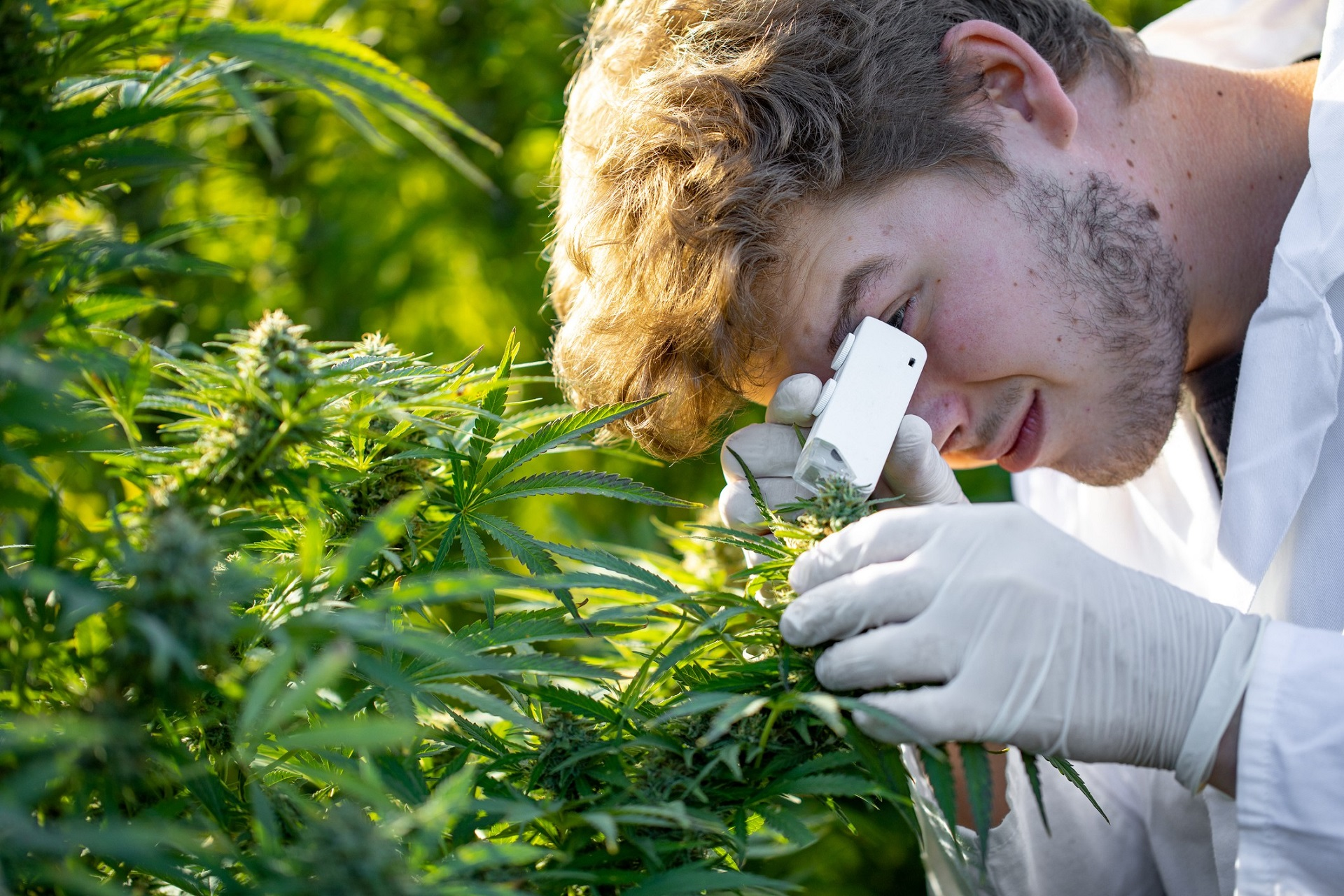 Therapeutic Uses of Marijuana - Are They Worth Considering?